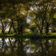 Murighiol – Dunavat
