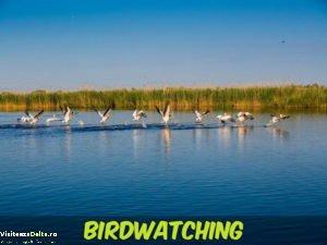 birdwatchingcoperta.1