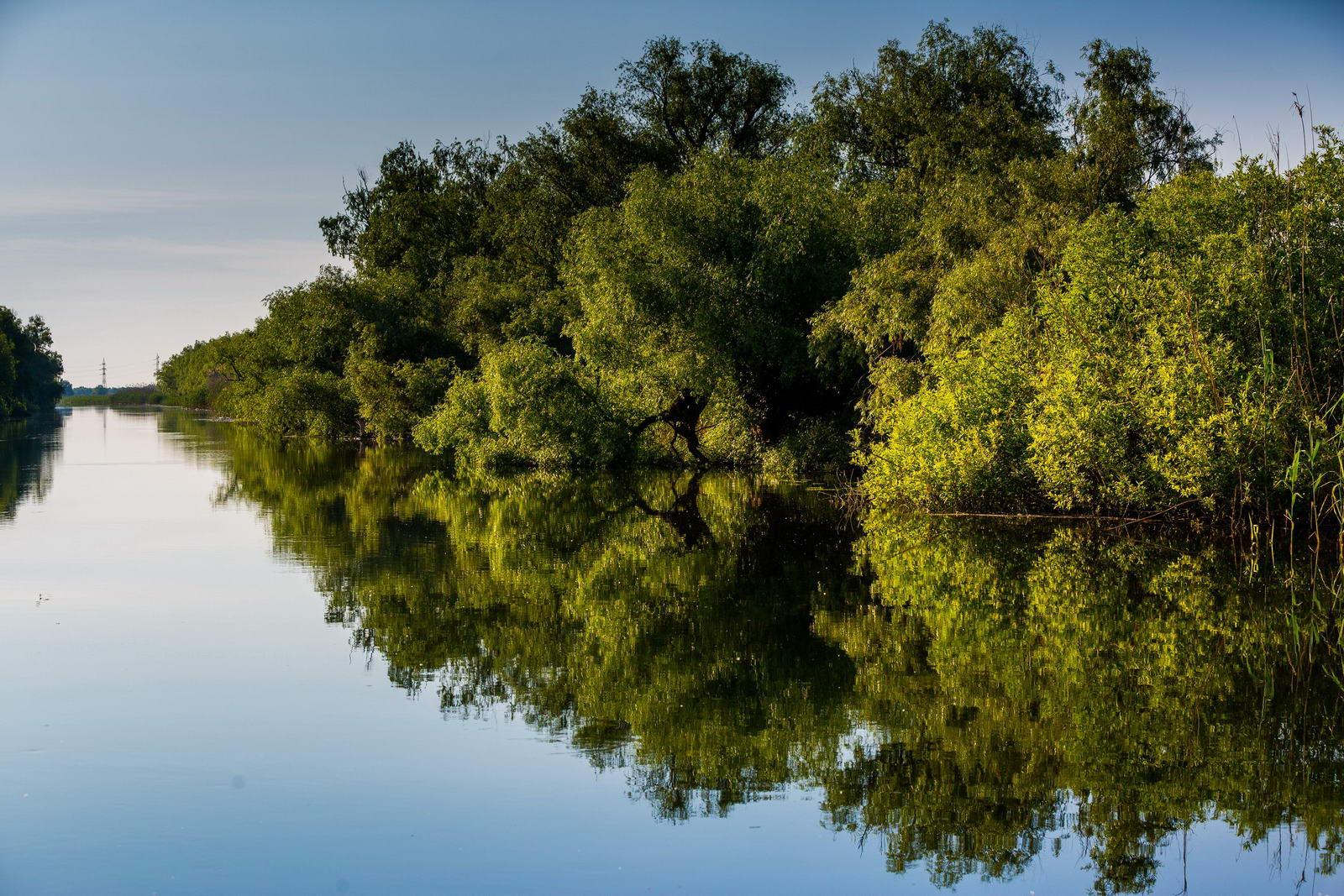 Peisaj cu vegetatie abundenta in Delta