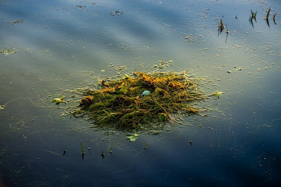 Cuibar pe lacurile din Delta
