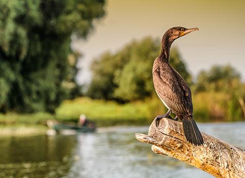 Birdwatchingin Delta Dunarii