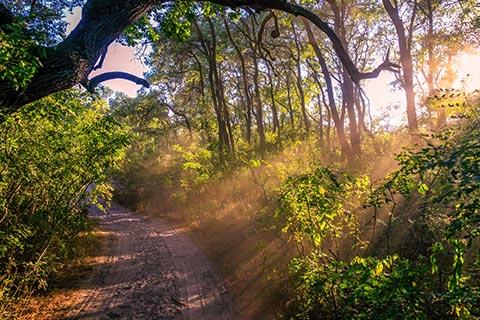 Excursie la Padurea Letea